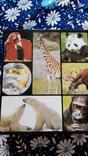 В мире дикой природы. Энциклопедия для детей в карточках., фото №2