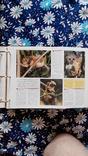 В мире дикой природы. Энциклопедия для детей в карточках., фото №5