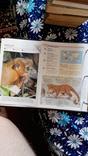 В мире дикой природы. Энциклопедия для детей в карточках., фото №6