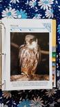 В мире дикой природы. Энциклопедия для детей в карточках., фото №7