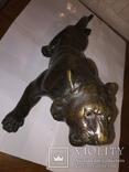 Тигр, фото №6