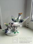 Птицы, фото №2