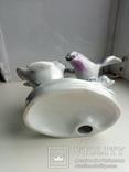 Птицы, фото №3