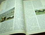 Книга страны и народы зарубежная азия, фото №5