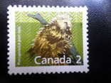 Фауна. Канада. Mlh, фото №2