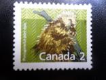 Фауна. Канада. Mlh, фото №3