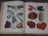 Н.Т.Митасова - Дары лета, фруктово-овощной стол, фото №8