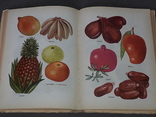 Н.Т.Митасова - Дары лета, фруктово-овощной стол, фото №9