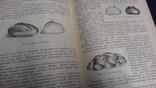 1949г. кондитерское. конфеты. печенье. хлебобулочные. товары., фото №8