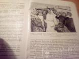 """П.Сліпчук, П. Калениченко """"У чарівному місті"""", вид. ЦК ЛКСМУ """"Молодь"""" 1955г, фото №9"""