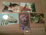 """10 открыток набор """"Зоопарк. Животные"""", фото №7"""