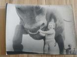 У быка ребенок, фото №2
