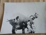 На быке, фото №2