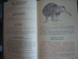 """""""Редкие и исчезающие животные"""" В.Соколов 1986г., фото №4"""