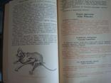 """""""Редкие и исчезающие животные"""" В.Соколов 1986г., фото №6"""