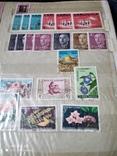 Кляссер с марками Европы + бонус гора марок, фото №11