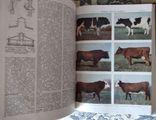 Украинская сельскохозяйственная энциклопедия, 1969, в 3 томах, фото №4