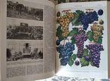 Украинская сельскохозяйственная энциклопедия, 1969, в 3 томах, фото №5