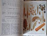 Украинская сельскохозяйственная энциклопедия, 1969, в 3 томах, фото №8