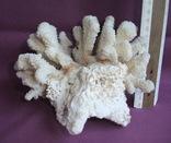 Кораллы из Индийского океана вес 903 грамма., фото №6