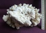 Кораллы из Индийского океана вес 903 грамма., фото №12