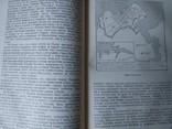 История Древнего мира. 1956 г., фото №9