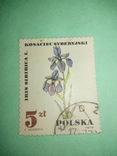 Марка Польская цветок, фото №2