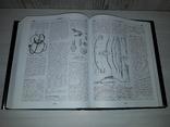Славянская энциклопедия в 2 томах 2005 Киевская Русь- Московия, фото №7