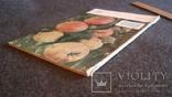 Садоводство, виноградарство и виноделие Молдавии 6/1963, фото №7
