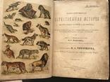1911 Ф. Берге. Иллюстрированная Естественная история. Животные Растения Минералы, фото №2