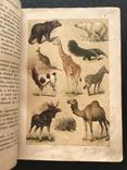 1911 Ф. Берге. Иллюстрированная Естественная история. Животные Растения Минералы, фото №7