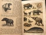 1911 Ф. Берге. Иллюстрированная Естественная история. Животные Растения Минералы, фото №11