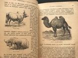 1911 Ф. Берге. Иллюстрированная Естественная история. Животные Растения Минералы, фото №12