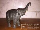Слон, фото №4