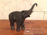 Слон, фото №5