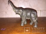 Слон, фото №8