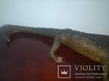 Крокодил мумия, фото №6