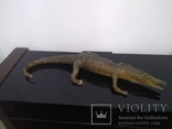 Крокодил мумия, фото №9