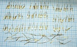 Позолота на аффинаж., фото №11
