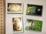 Коллекционные спички, Ровненская спичечная фабрика / 4 коробки, фото №3