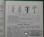 Занятия по изобразит. деятельности в детском саду., фото №6