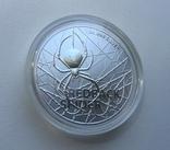 Красноспинный паук Австралия 1-я монета в серии, фото №4