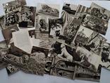 Комплект листівок. Льви стерегут город. 1979 р. 24 шт., фото №5