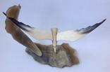 Чайка над морем. Кость. 1969г., фото №5