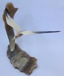 Чайка над морем. Кость. 1969г., фото №6