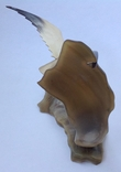 Чайка над морем. Кость. 1969г., фото №8