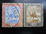 Фауна. Судан. Верблюд.  гаш, фото №2