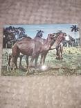 Животные, Куба, фото №12