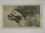 Открытка до 1917 Матерь Пуриссима  №83, фото №3