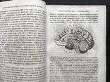 1880 Вильгельм Вундт. Основания физиологической психологии. Перевод Виктор Кандинский, фото №7